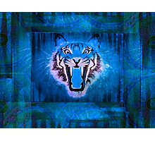 Blue Tiger Photographic Print