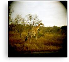Girafe patterns Canvas Print