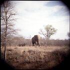 Elephant by Melissa Ramirez