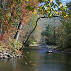 Oconoluftee River in Smoky Mountains by Danny Close