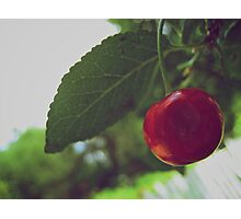 Cherry Tree Photographic Print