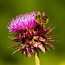 Moth On The Thistle by georgiaart1974