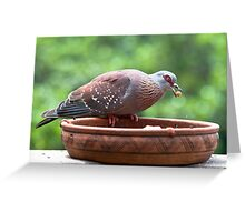 Pigeon & The Cat Pellets Greeting Card