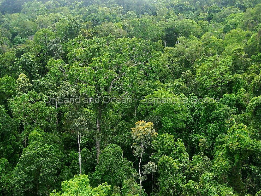 Quot Ancient Tropical Rainforest Canopy Quot By Of Land Amp Ocean