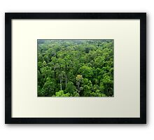 Ancient Tropical Rainforest canopy  Framed Print