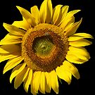 Sunflower with Bee by Bev Pascoe