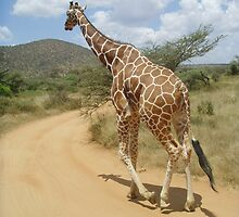 Wildlife Leg It!!!! Giraffe  by Amie Swannell