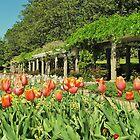 Springtime at the garden by ANNABEL   S. ALENTON