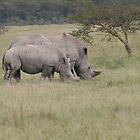 Wildlife Fatherly Love xxx by Amie Swannell