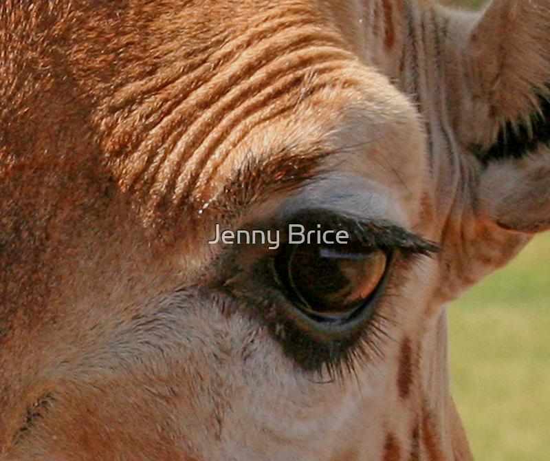 Wrinkled Eyebrow by Jenny Brice