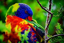 Rainbow Preening by bygeorge