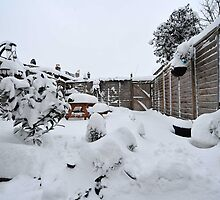 Snow In My South London Garden by John Hooton