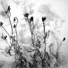 Flower shadows 1 by Aneta Bozic