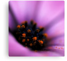 Up Close with Daisy Canvas Print