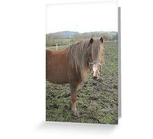Horse at Churchdown Greeting Card