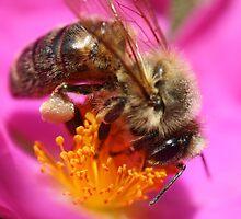 Pollen Covered Bee by Adam Evans