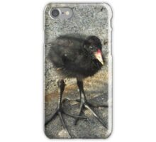 Cute Coot Chick iPhone Case/Skin