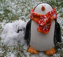 Even Penguins Feel the Cold by emanon