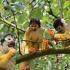 Reese's Monkeys by MooseMan
