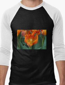 tulips in bloom Men's Baseball ¾ T-Shirt