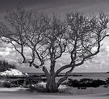 Winter Day by Dave  Higgins