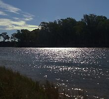 Sunlight on a bend in the river by ndarby1
