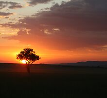 African Sunset by Amie Swannell