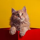 The Cat in the Red Box by hotamr