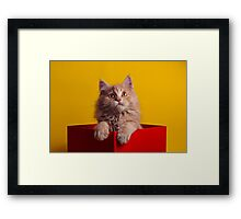 The Cat in the Red Box Framed Print