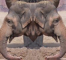 Elephant Double Header by biglnet