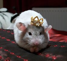 King hammy by Louise Masters