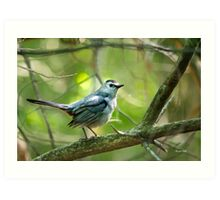 Gray Catbird Bird Art Art Print