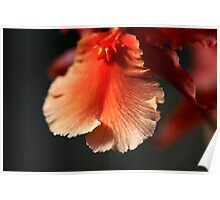 Orchid Ruffles Poster