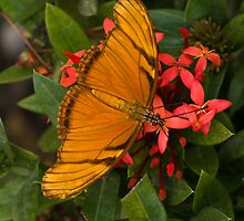 Sayulita butterfly by David Chesluk