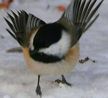 A Fiesty Chickadee...I Said Go Away!!! by MaeBelle