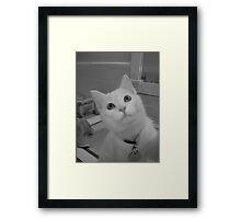 Casper Framed Print