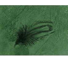 feathery Photographic Print