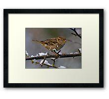 Snowboarding Sparrow Framed Print