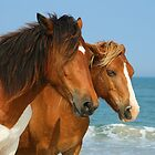 Assateague Horses by Jesse Simmers