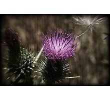Thistle While You Work Photographic Print