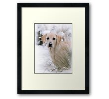 Snow Daisy Framed Print