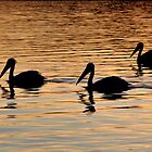 Pelican Silhouettes by Jo Nijenhuis