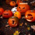 pumpkin patch by Bill vander Sluys