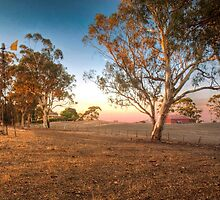 On The Farm II - Nairne, South Australia by Mark Richards