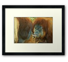 Apes in Love. Framed Print
