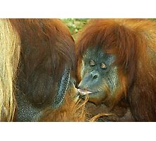 Apes in Love. Photographic Print