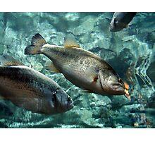 Fish Tank Photographic Print