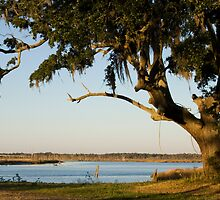 Live Oak and Spanish Moss by Jonicool