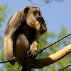 Female Black Howler Monkey by Anne-Marie Bokslag