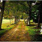 The Long Driveway Sandwich New Hampshire by Wayne King